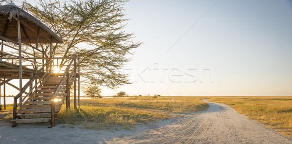 African Safari Stock photo © THP