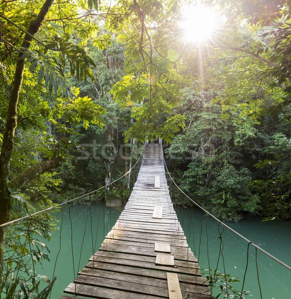 Floresta passarela ponte rio Belize Foto stock © THP