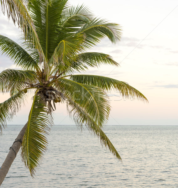Palm Tree Over Ocean Stock photo © THP