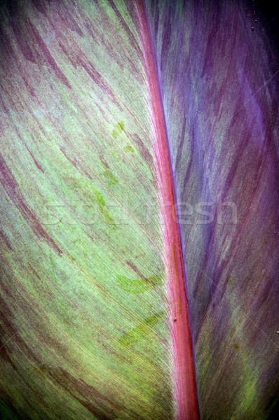 Pastel Leaf Detail Stock photo © THP