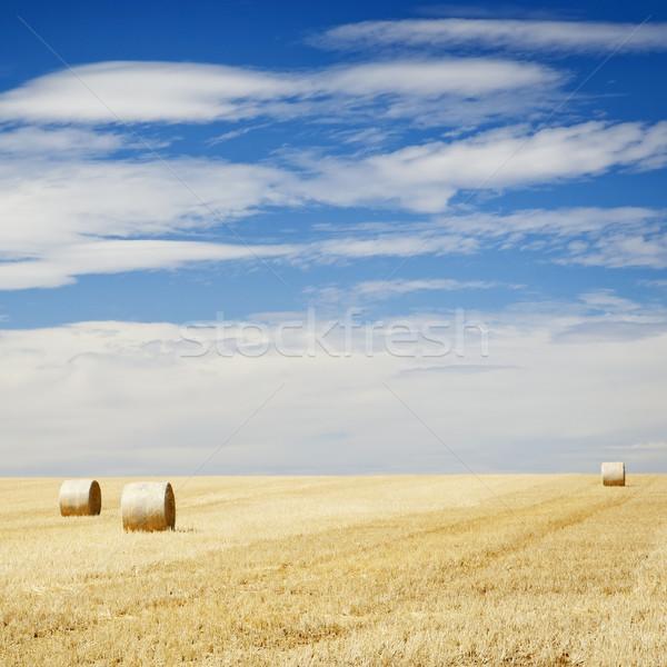 Сток-фото: сено · полях · лет · время · урожай · небе