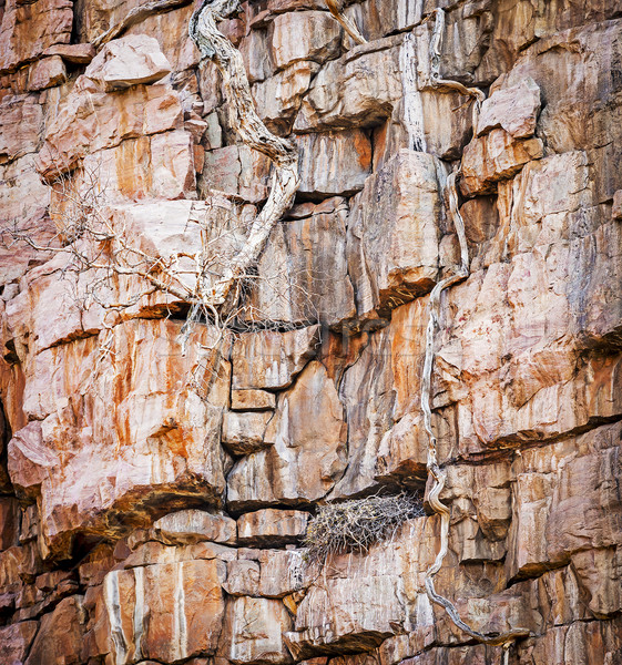 Vulture Nest On Cliffs Stock photo © THP