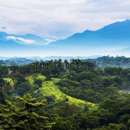 Mexico Jungle Landscape Stock photo © THP