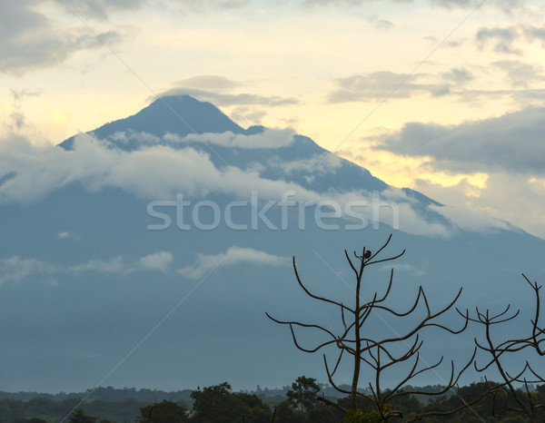 Volcán Guatemala aves Foto stock © THP