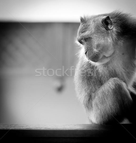 Majom vad szórakozás portré ázsiai fekete-fehér Stock fotó © THP
