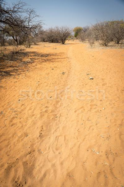 African Desert Tracks Stock photo © THP