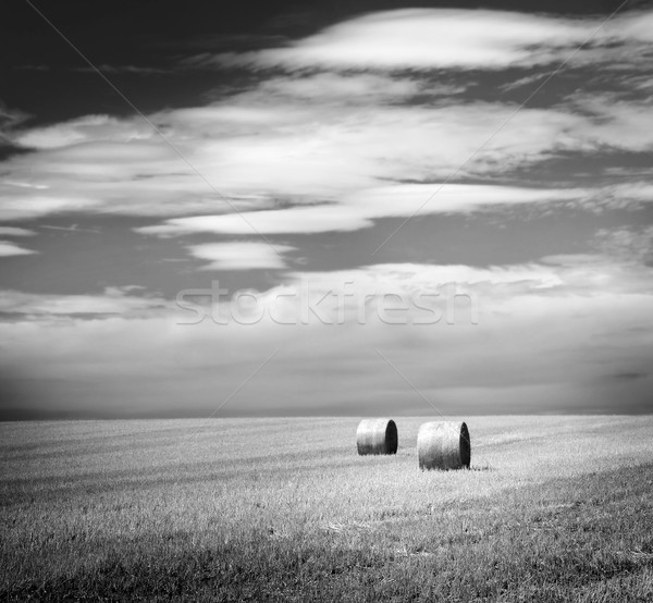 Hay Bales Black and White Stock photo © THP