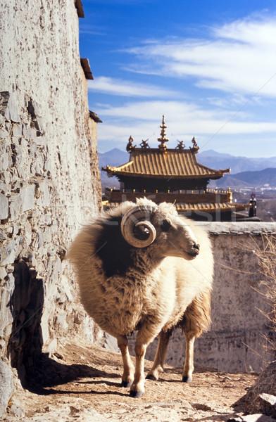 Tibetan Temple Stock photo © THP