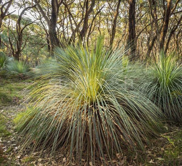 Australian Landscape Stock photo © THP
