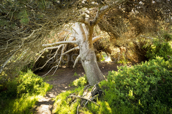 Fairytale Tree Stock photo © THP