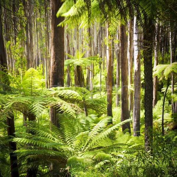 Varen bos weelderig groene varens boom Stockfoto © THP