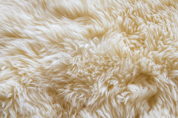 Wool Stock photo © THP