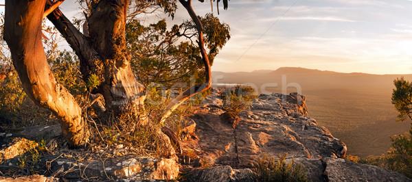 Australian Bush Landscape Stock photo © THP