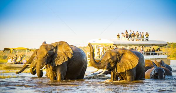 African Elephant Safari Stock photo © THP