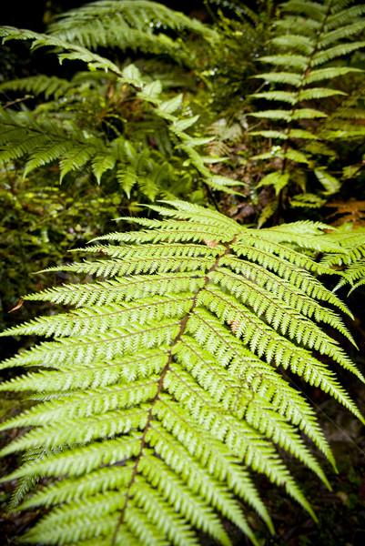 Stock photo: Leaf Detail