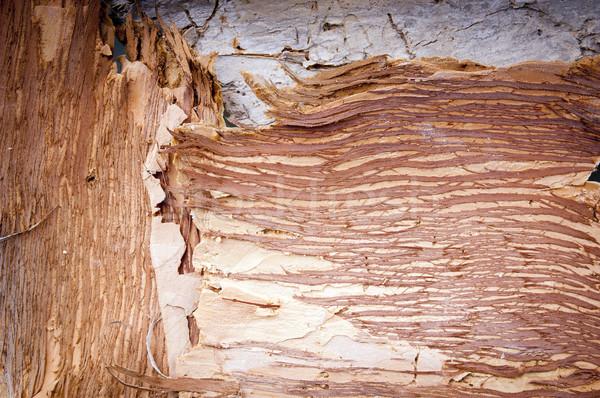 Papier schors boom achtergronden materiaal Stockfoto © THP