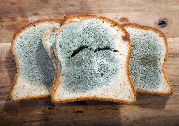 Moldy Bread Stock photo © THP