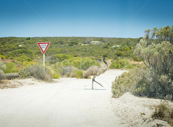 Emu Give Way Sign Stock photo © THP