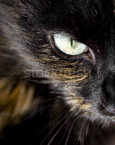 Macskák szem közelkép bámul szemek macska Stock fotó © THP