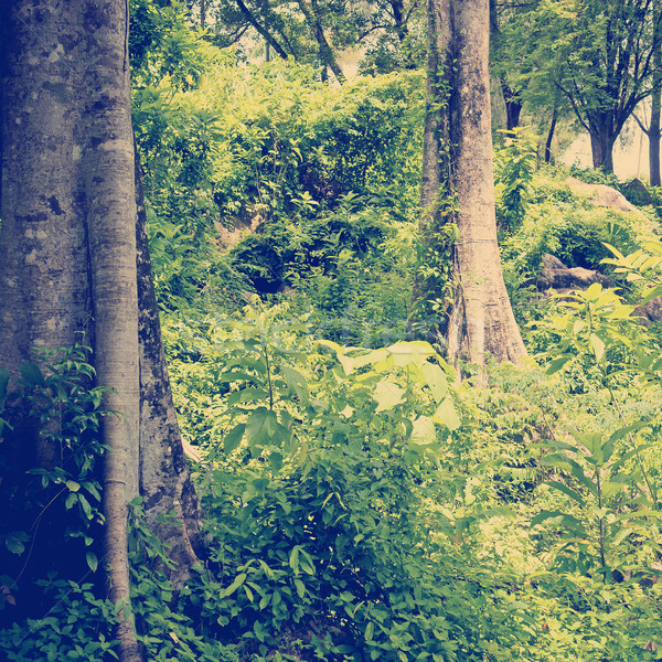 джунгли пейзаж тропические зеленый Сток-фото © THP