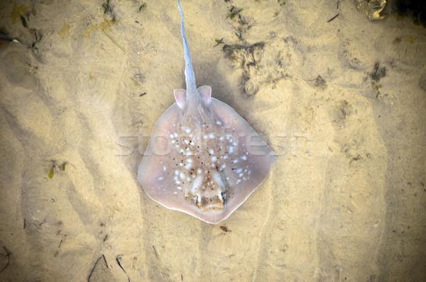 Océan étage eau mer Photo stock © THP