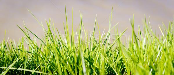 Stock fotó: Fű · zöld · fű · elmosódott · természet · kert · park