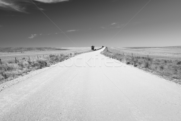 Country Road Black and White Stock photo © THP
