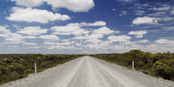 Wild Road Stock photo © THP