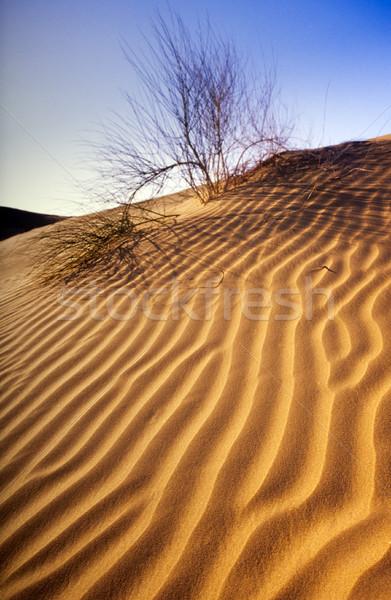 Woestijn duin Indië textuur landschap licht Stockfoto © THP