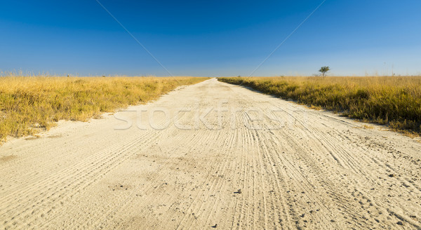 Africa Plains Road Stock photo © THP