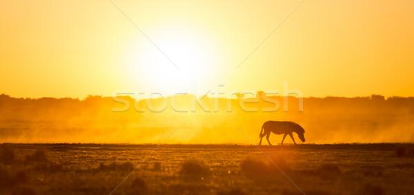 Stock fotó: Zebra · naplemente · Afrika · Botswana · gyönyörű · fény