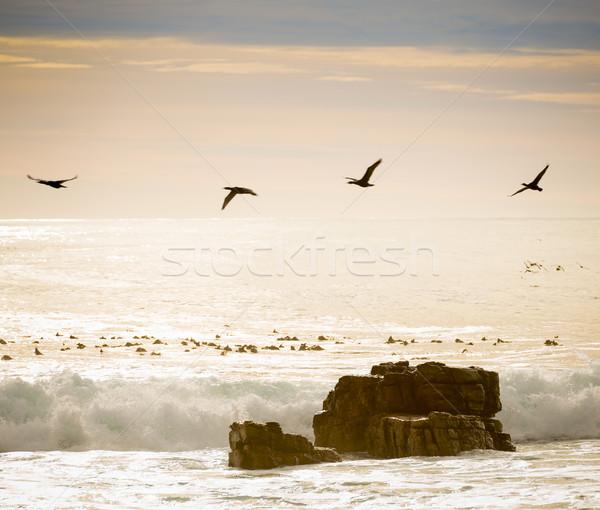 Birds Flying Over Ocean Stock photo © THP