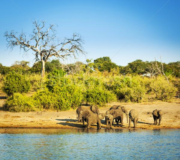 Elephant Herd Africa Stock photo © THP
