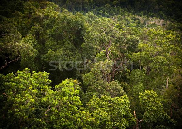 Dzsungel tájkép bámul trópusi vibráló zöld Stock fotó © THP