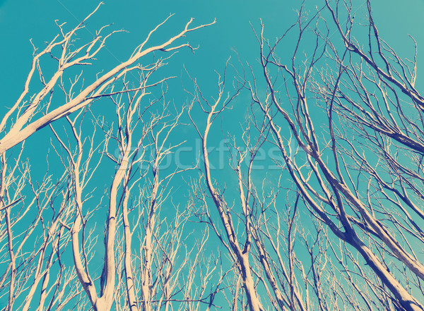 Vintage Trees Stock photo © THP