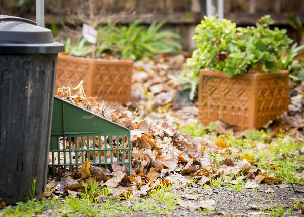 Raking Leaves Stock photo © THP