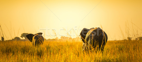 Elephants Walking Away On African Plains Stock photo © THP