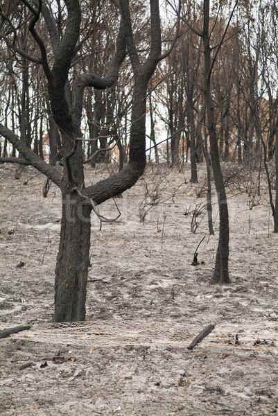 Буш огня деревья дерево лес филиала Сток-фото © THP