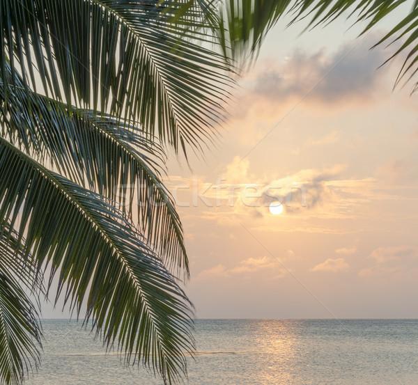 Caribbean Sunrise Palms Background Stock photo © THP