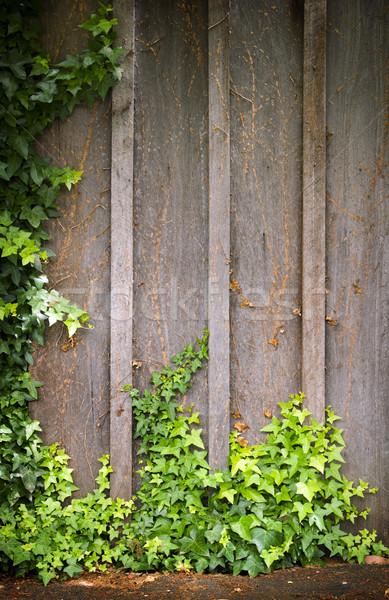 Lierre mur cadre croissant bois chambre Photo stock © THP