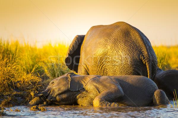 Olifanten spelen modder jonge oude rivieroever Stockfoto © THP