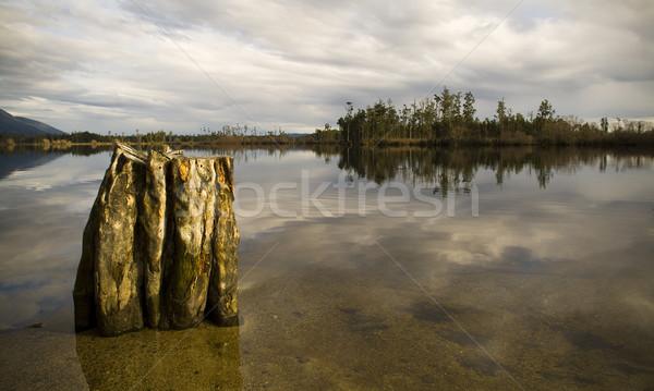 Foto stock: Perfeito · lago · velho · árvore · floresta