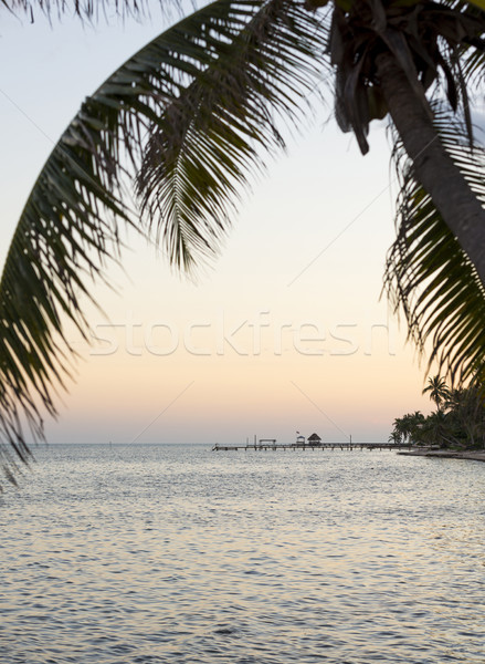 Island Palmtree Over Sea Stock photo © THP
