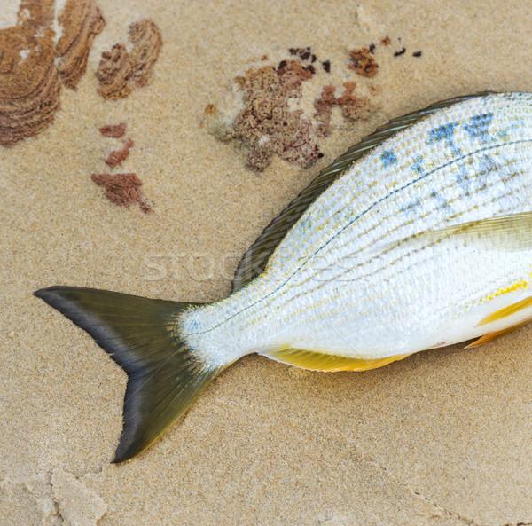 魚 尾 ビーチ 水 男 ストックフォト © THP
