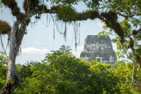 Giungla rovine tempio natura viaggio pietra Foto d'archivio © THP