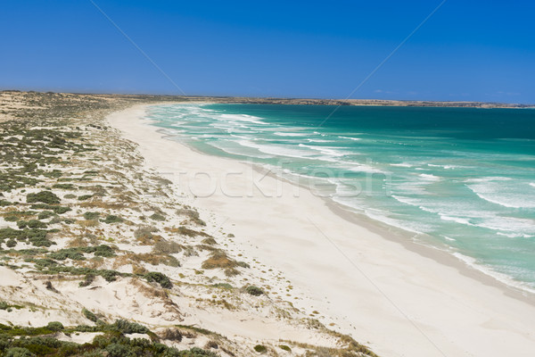 Coastal Sand Dunes Stock photo © THP