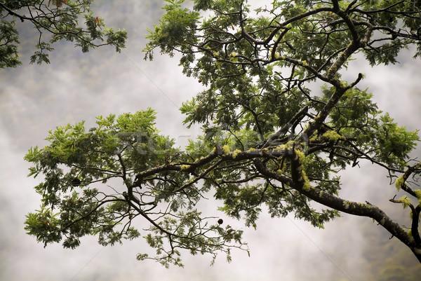 Misty Woods Stock photo © THP