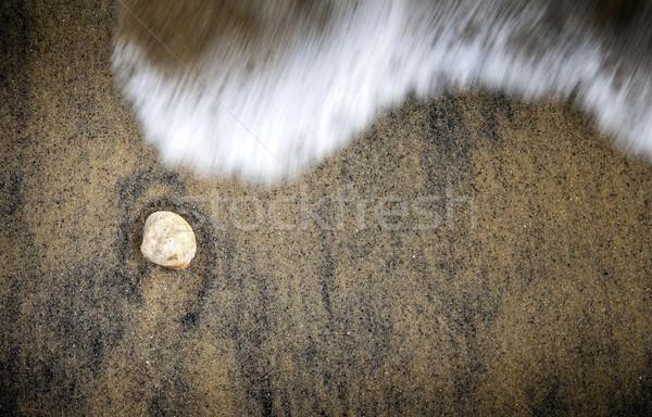 оболочки песок простой текстуры солнце природы Сток-фото © THP