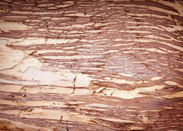 Papier Rinde Baum Hintergrund Material Stock foto © THP