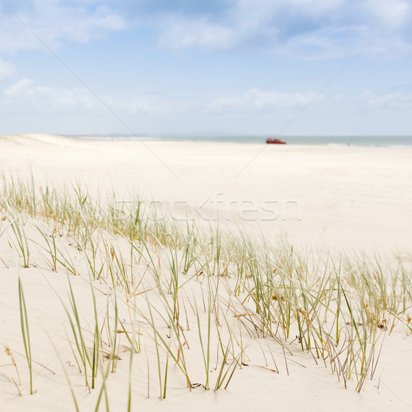 Beach Grass with 4WD Stock photo © THP